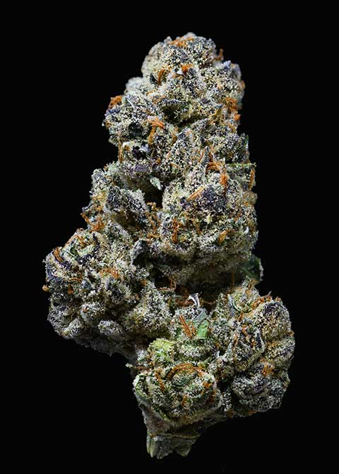 scooby cookies cannabis strain by doghouse farms